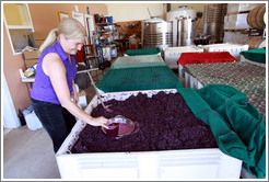 Winemaker Katy Lovell of Poetic Cellars pulling juice from the must (fermenting grape juice).