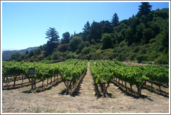 Portola Springs Vineyard.  Thomas Fogarty Winery