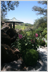 Garden.  Arista Winery.