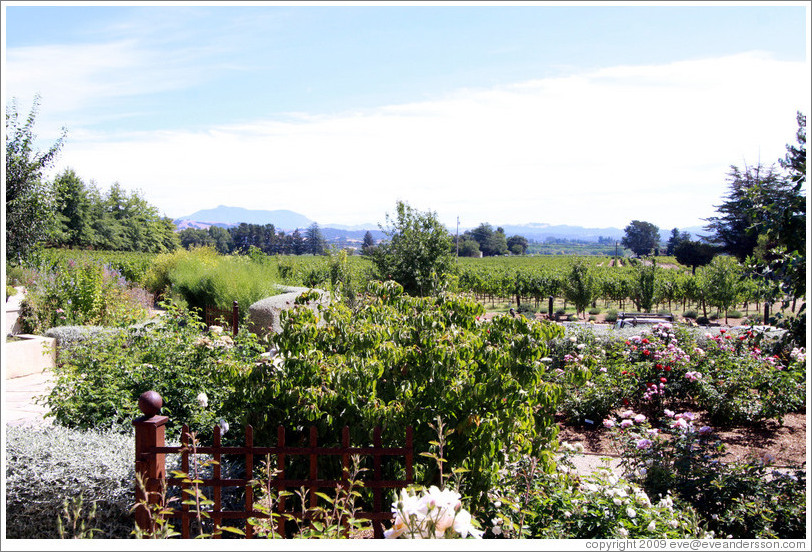 Garden and vineyard, C. Donatiello Winery.