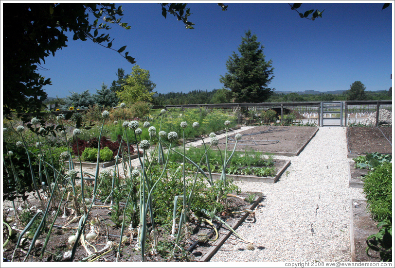 Vegetable garden.  DeLoach Vineyards.