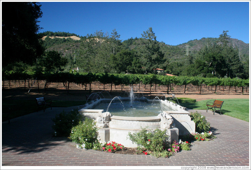 Fountain and vineyard.  Ledson Winery and Vineyards.