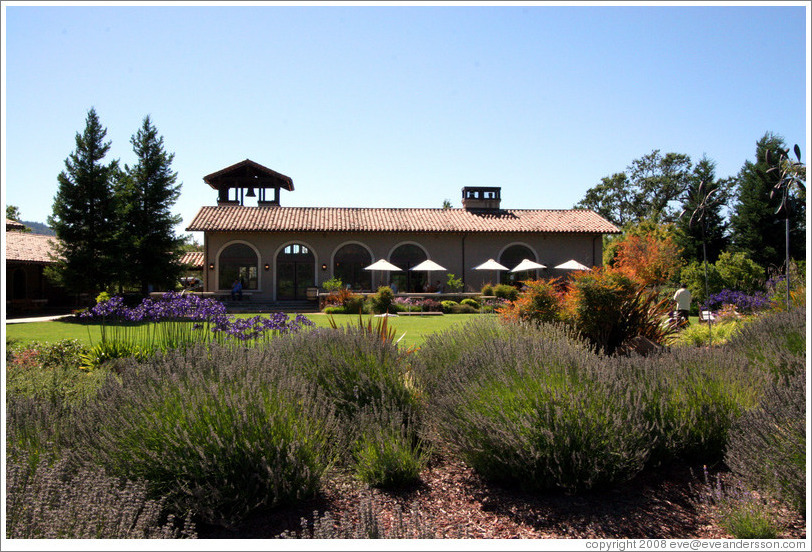 Lavender plants.  St. Francis Winery and Vineyards.
