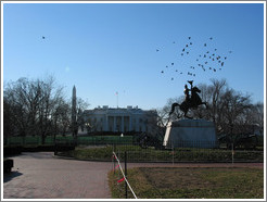 Back of the White House.  Birds flying over a statue.
