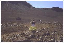 Jin reading. Haleakala.
