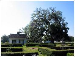 Evergreen Plantation.  Auxiliary building in backyard and big oak tree.