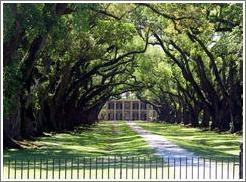 Oak Alley Plantation.