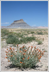 Factory Butte with orange flowers.