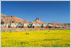 Landscape with yellow flowers near Goblin Valley.